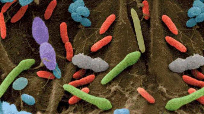 microbi-suolo